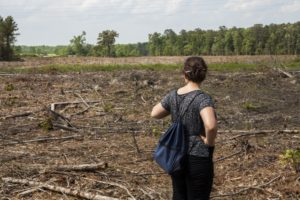 A typical SE US clearcut for pellet production for the EU, photo: Dogwood Alliance