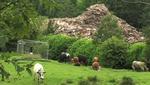 1-waste-wood-pile-mossley-2011