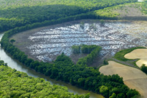 Clearcutting of coastal swamp forests in North Carolina, which supplies wood to an Enviva pellet mill, Photo: Dogwood Alliance
