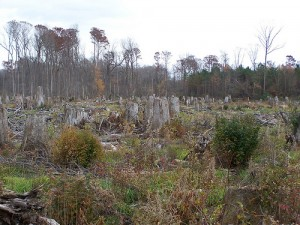 Deforestation is on the increase in the Southeast US, pictured here, as well as in other parts of the world due to the UK's increased demand for biomass. Photo courtesy of the Dogwood Alliance
