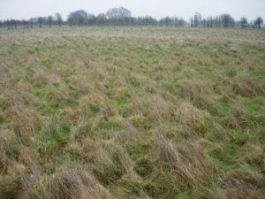 Could UK grass replace natural gas for home heating?